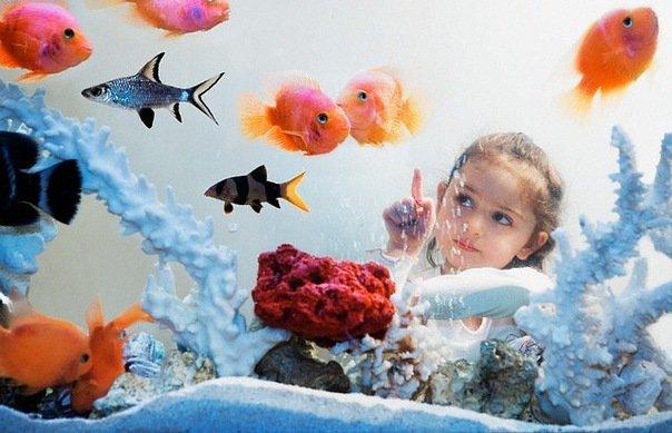 Правильный аквариум радует глаз и не требует особого ухода