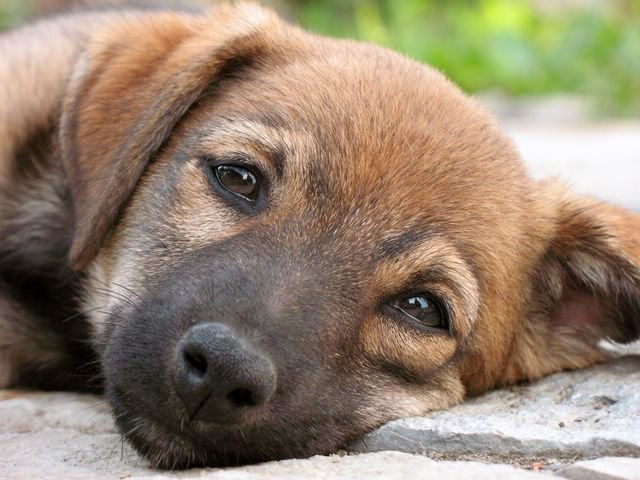 Как отблагодарить собаку за верность?