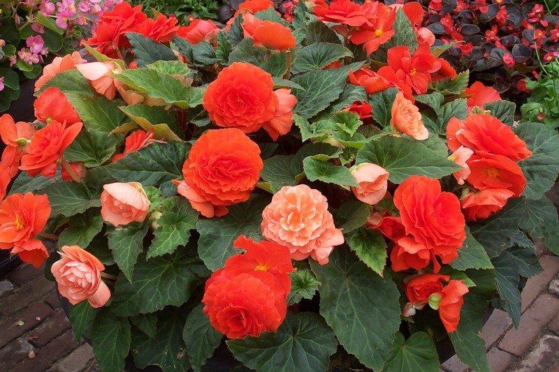 Цветы в доме: красота и жизненная энергия