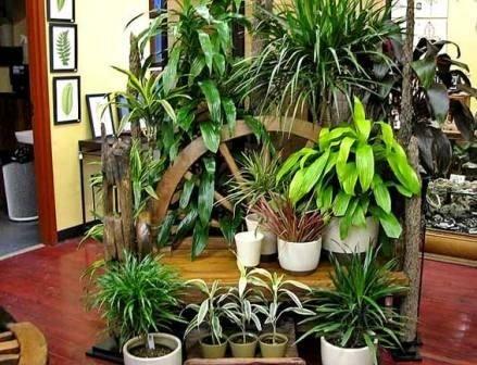 Создание зимнего сада в квартире