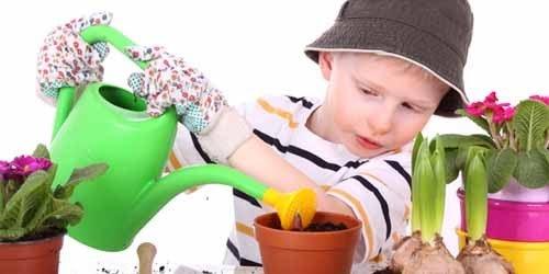 Безопасность ребенка в доме: о ядовитых комнатных растениях