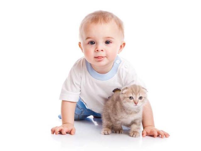 Дети и домашние животные: меры предосторожности