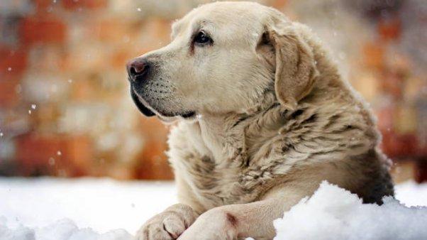 Домашние животные и человеческое  жилье: вечная борьба этики с эстетикой