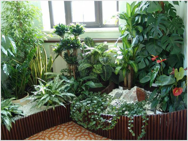 Советы тем, кто решил устроить в квартире цветочный рай