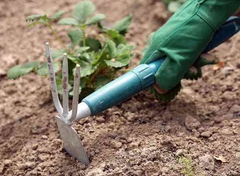 Для чего необходимо рыхлить почву в саду