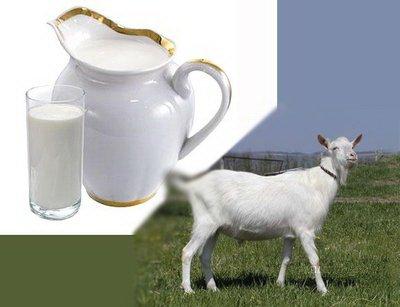 Козье молоко – на страже здоровья человека